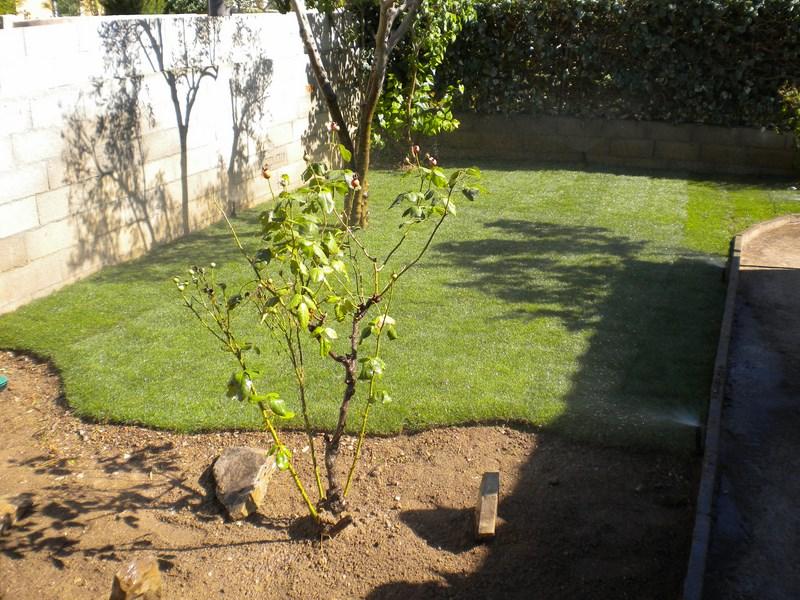 Création d'un jardin à Baillargues (après)